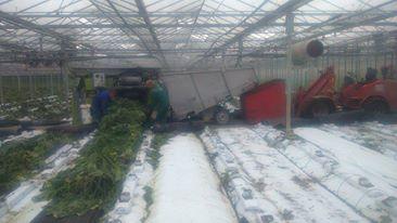 tuinbouwloonwerk-courgetten